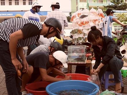 kinh doanh cá kiểng