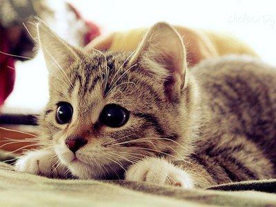 nuôi mèo
