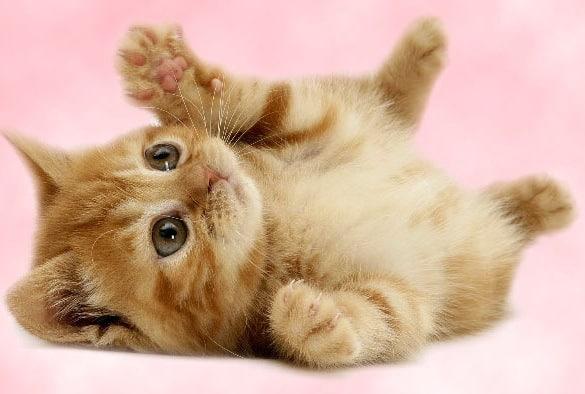 phong thuỷ nuôi mèo