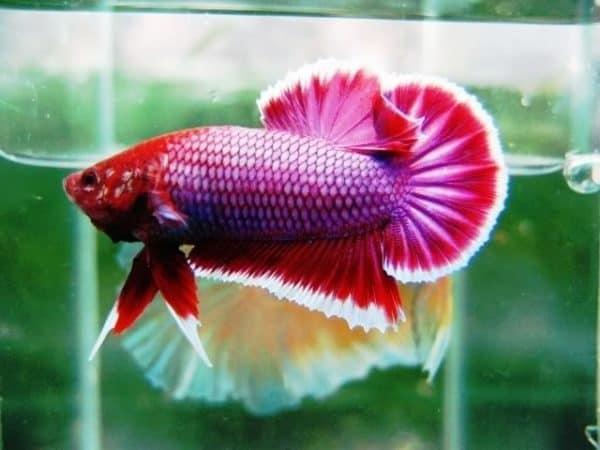 Photo of Bí quyết giúp bạn chăm sóc cá kiểng sinh sản