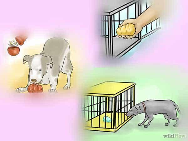 Photo of Chó bị nôn mửa: Hướng dẫn cách xử lý
