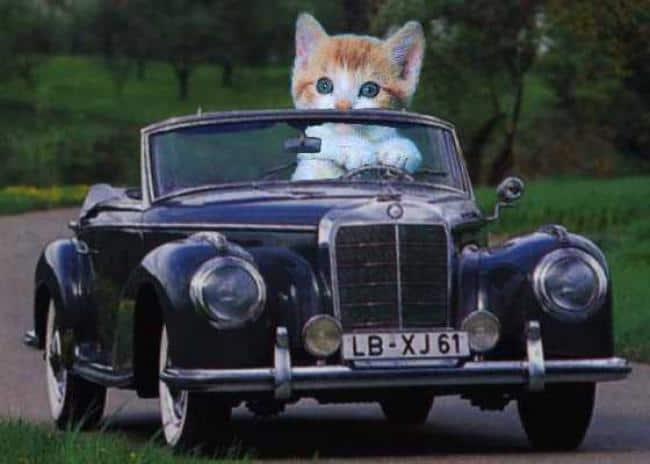 Photo of Khắc phục nỗi sợ xe hơi của thú cưng
