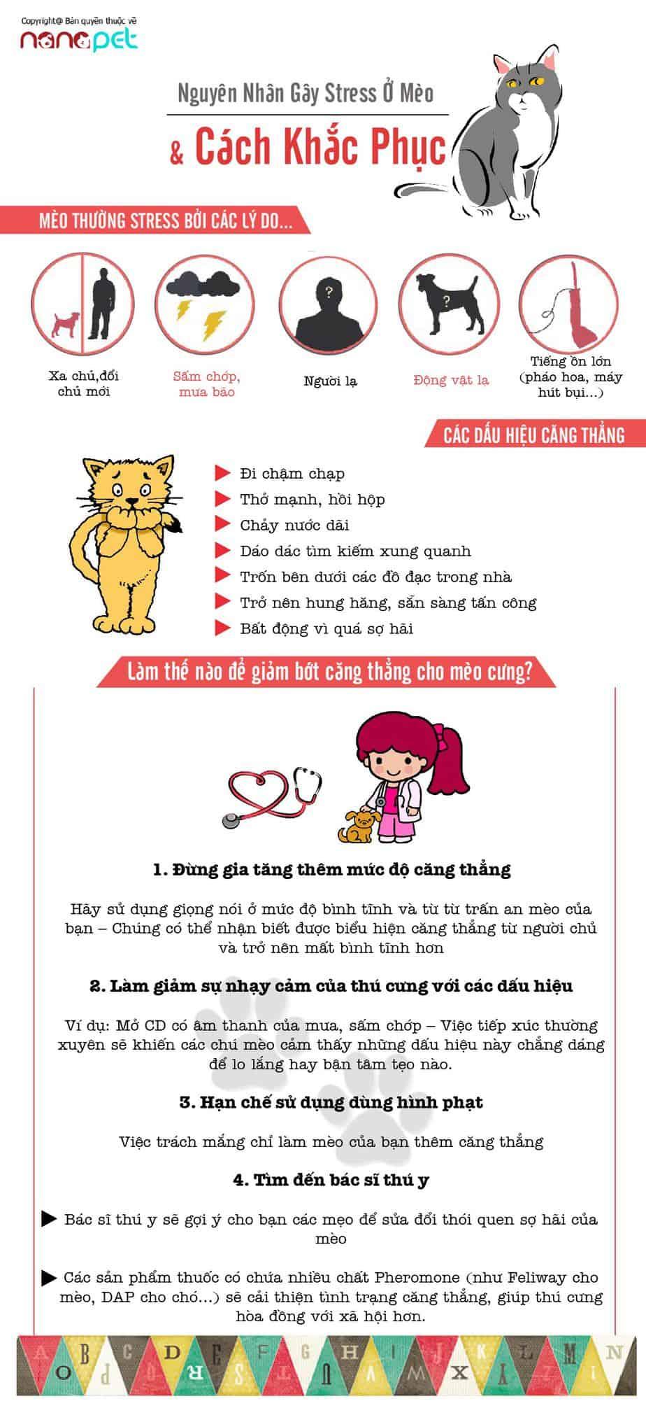 nguyên nhân gây stress ở mèo