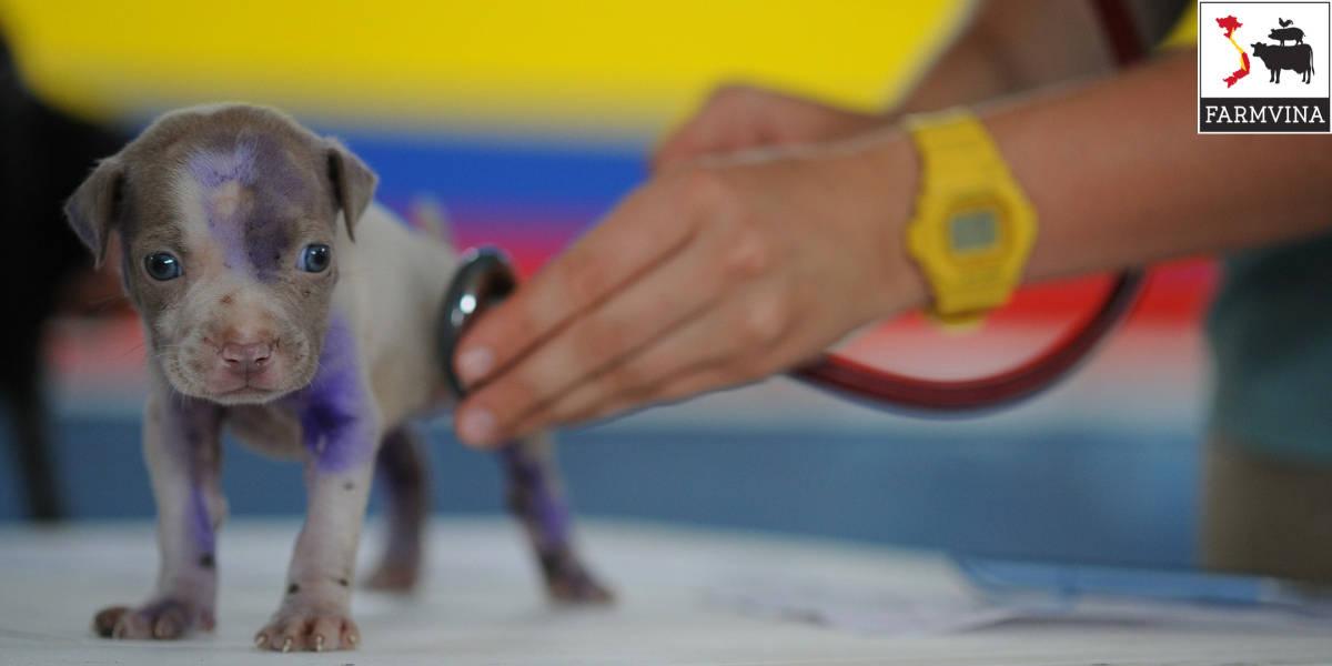 tiêm vắc-xin cho thú cưng