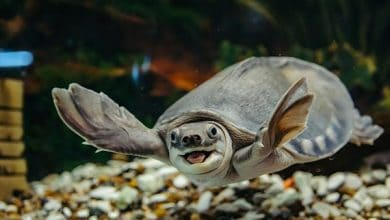 Photo of Rùa nước: Loại thú cưng mới hợp mọi gia đình