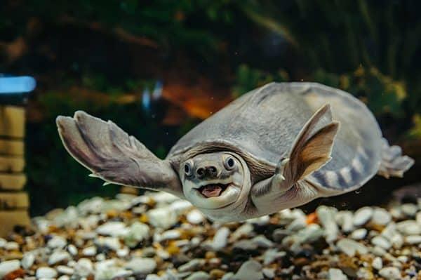 rùa nước