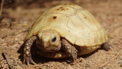 Photo of Rùa núi vàng: Cách nuôi và giá bán
