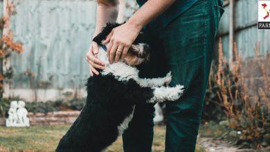 huấn luyện chó con