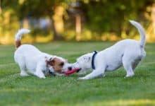 tập thể dục cho chó