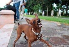 Chó không cắn chủ